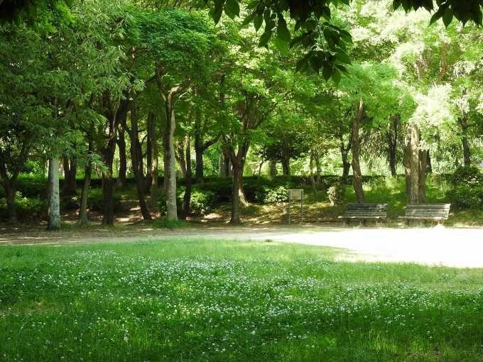 森林(自然のエアロゾル(ナノ粒子)を放出するとされている)