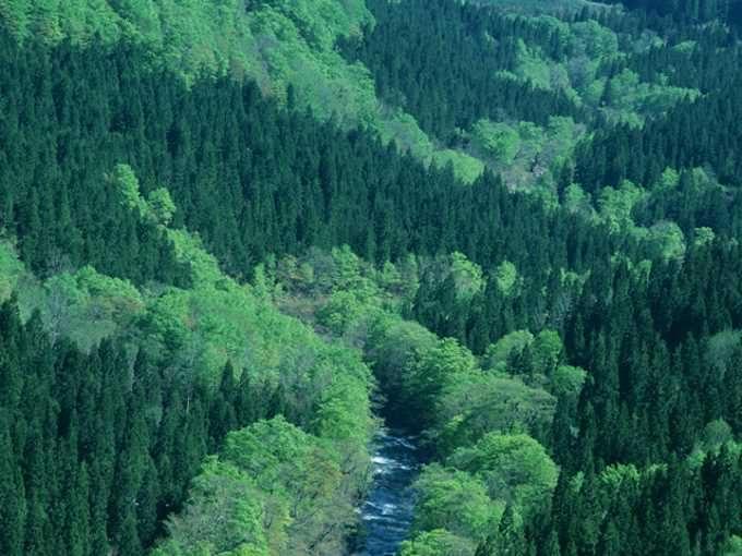 日本は世界的にも有数の森林資源国